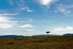 Lone tree in Maasailand, Kenya