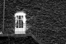 Harvard's ivy door
