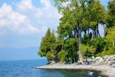The Swimming Cove