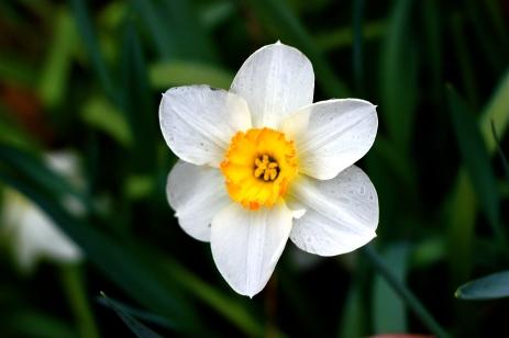 Mom's Flower