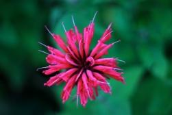 Mom's Flower II