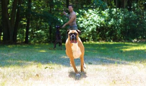 Dog on the Run
