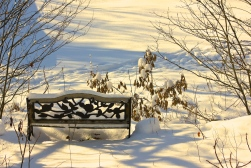 The Winter Bench
