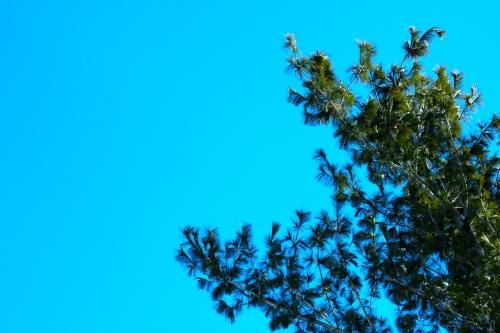 Blue Sky. Green Tree.