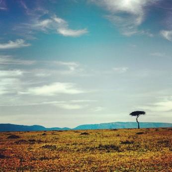 The Lone Acacia in Kenya