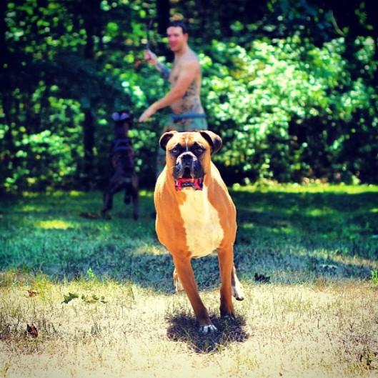 Ollie on the Run
