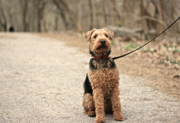 Hank in High Park No. 2