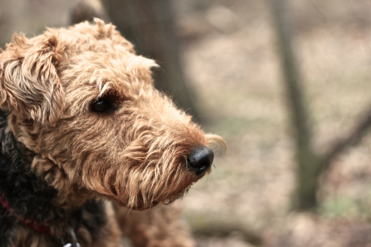Hank in High Park No. 7