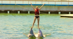 Riding the dolphins.