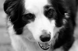 Awesome Dog: Legend.