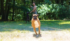 Awesome Dog: Ollie.