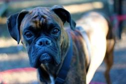 Awesome Dog 3: Tucker.