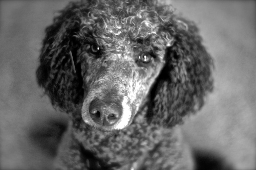 Awesome Dog 8: Mulligan.