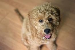 Awesome Dog 11: Roscoe.