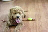 Awesome Dog 12: Roscoe.