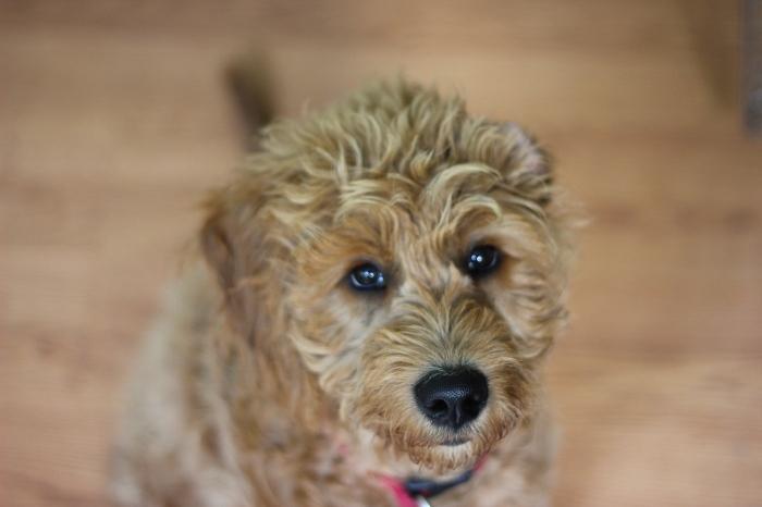 Roscoe (Photo by Ryan Bolton)