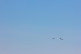 A Lone Seagull