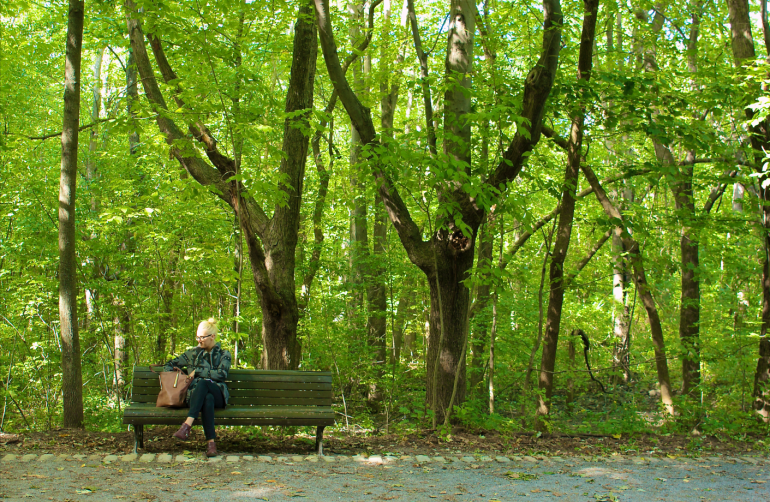 Park Bench in Mont Royal