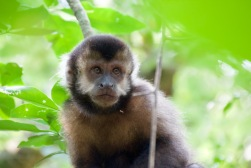 A wild monkey on Argentinian side of Falls.