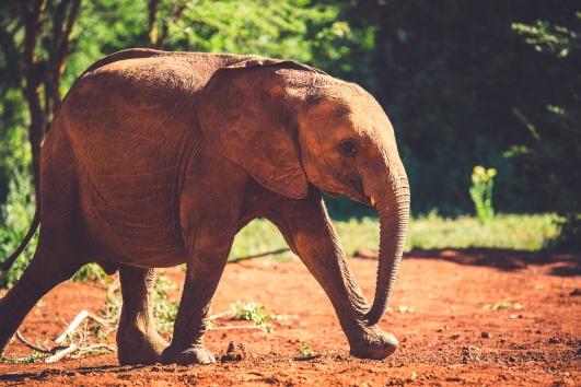 Demi in Kenya_Ryan Bolton-3K5A7439