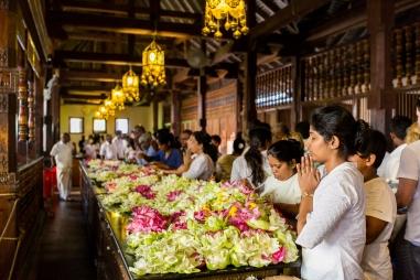 Sri Lanka_Intrepid_RyanBolton-3K5A3325
