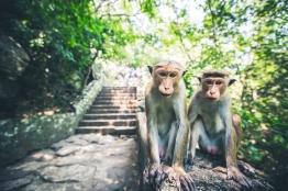 Sri Lanka_Intrepid_RyanBolton-3K5A3759