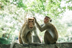 Sri Lanka_Intrepid_RyanBolton-3K5A3871