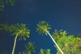Palm Trees in Sri Lanka at night