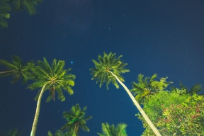 Palm Trees in Sri Lanka at night