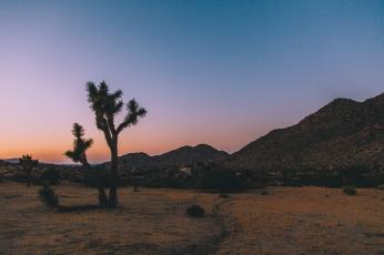 Joshua Tree, California at Sunset