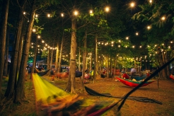 WH2017_Night Hammocks_RyanBolton1 (1)