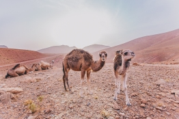 Morocco Berbers with Intrepid__RyanBolton-3K5A0122
