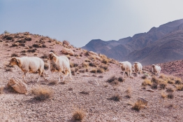 Morocco Berbers with Intrepid__RyanBolton-3K5A0570