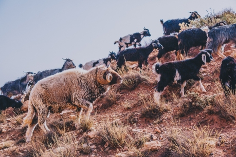 Morocco Berbers with Intrepid__RyanBolton-3K5A0584