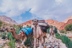 Morocco Berbers with Intrepid__RyanBolton-3K5A1143
