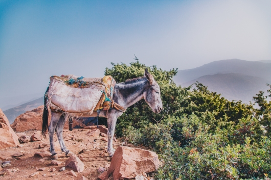 Morocco Berbers with Intrepid__RyanBolton-3K5A9901