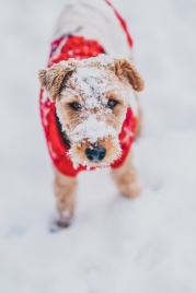 Hank in the Snow
