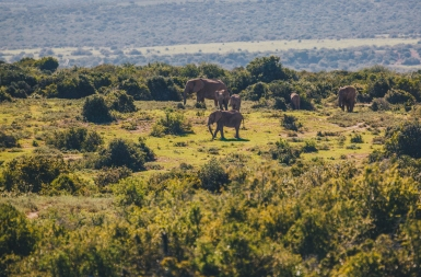South Africa Adventure with Intrepid__Ryan Bolton-3K5A2642
