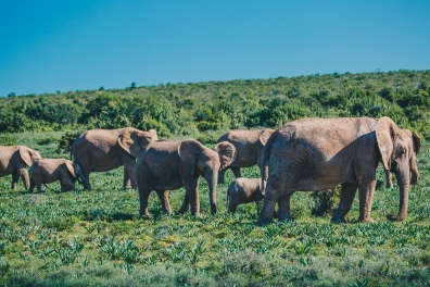 South Africa Adventure with Intrepid__Ryan Bolton-3K5A2687