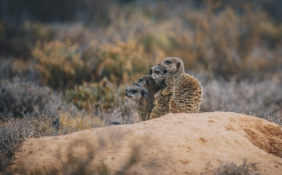 South Africa Adventure with Intrepid__Ryan Bolton-3K5A3284