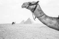 Egypt Content Trip Intrepid__Ryan Bolton-3K5A3762