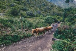 Inca Trail in Peru with Intrepid__Ryan Bolton-3K5A8081