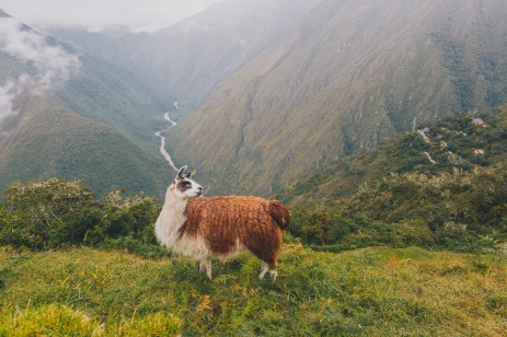 Inca Trail in Peru with Intrepid__Ryan Bolton-3K5A8876