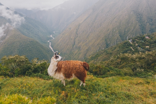 Inca Trail in Peru with Intrepid__Ryan Bolton-3K5A8876